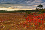 Golden Ruby Hour of Dolly Sods