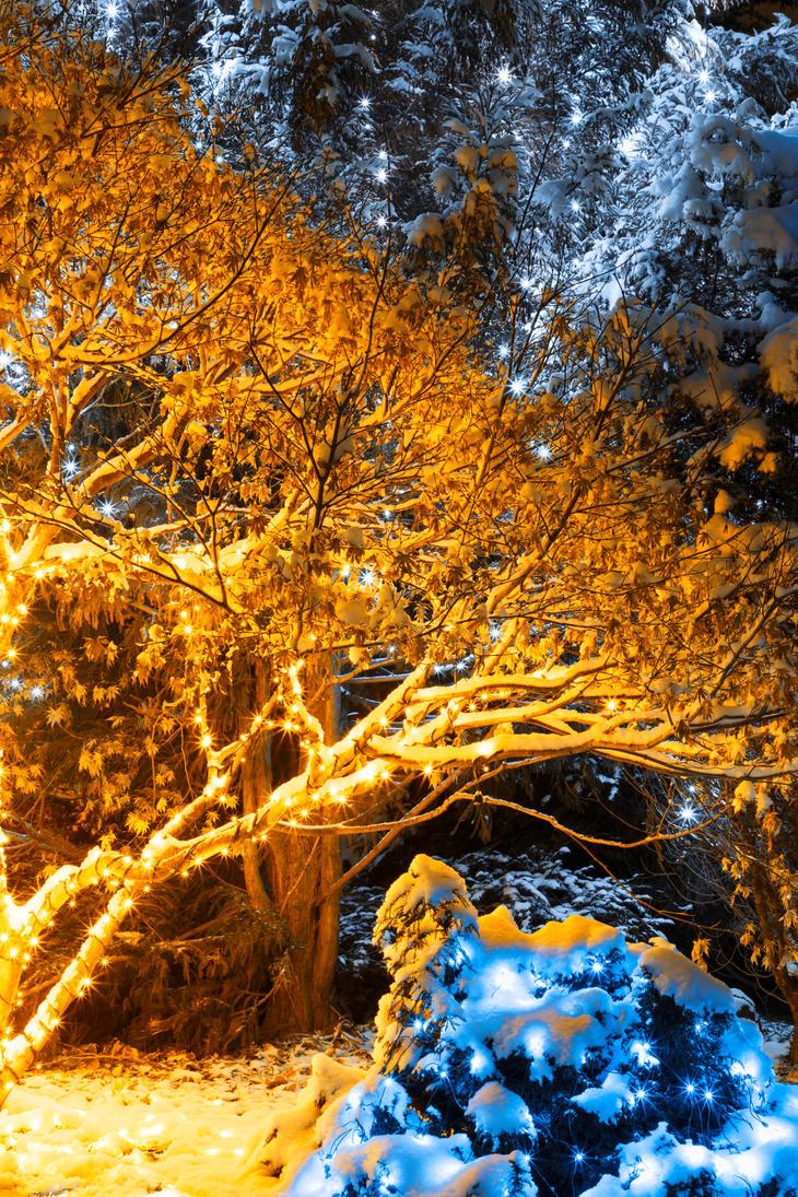Gold Winter Night - Meadowlark Gardens by somadjinn on DeviantArt