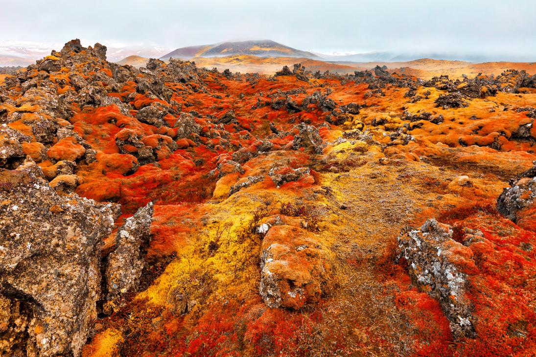 Iceland Moss Inferno by somadjinn