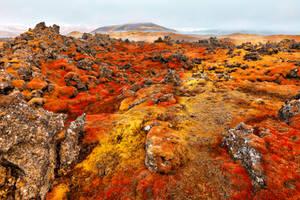 Iceland Moss Inferno