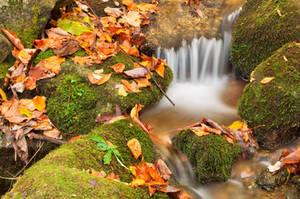 Wigwam Autumn Moss Stream by boldfrontiers