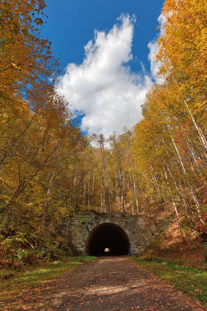 Forest Tunnel to Nowhere by boldfrontiers