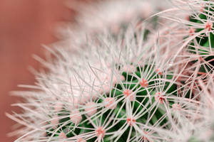 Cactus Dream Spines by boldfrontiers