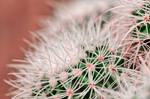 Cactus Dream Spines