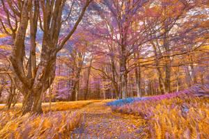 Fern Fairy Tale Trail by boldfrontiers