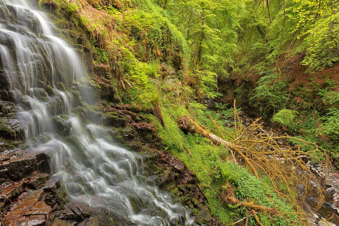 Aberfeldy Fell Tree Falls by somadjinn