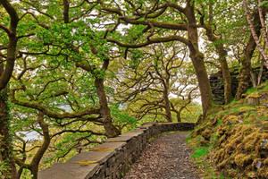 Dinorwic Woods Trail by boldfrontiers