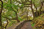 Dinorwic Woods Trail