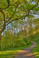 Golden Hour Forest Trail - Brecon Beacons by boldfrontiers