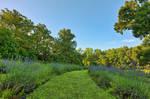 Soleado Lavender Trail