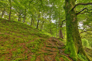 Dolbadarn Moss Forest Trail by boldfrontiers
