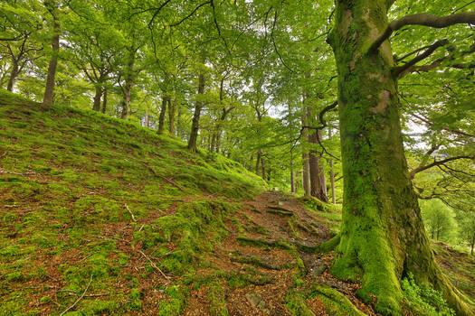 Dolbadarn Moss Forest Trail