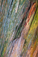 Water Colored Wood by boldfrontiers