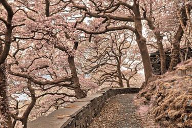 Welsh Fantasy Blossom Trail