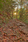 Smoky Mountain Sunburst Trail