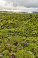 Rugged Green Moss of Iceland by boldfrontiers
