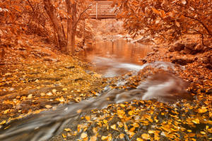 Hawk Run Autumn Fantasy by boldfrontiers