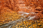 Hawk Run Autumn Fantasy