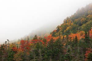 Autumn Fog of White Mountain (freebie) by boldfrontiers