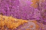 Potomac Fantasy Trail