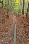 Juney Whank Forest Trail