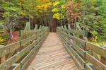 Autumn Bonshaw Bridge