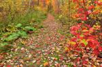 Autumn Harvey Forest Trail