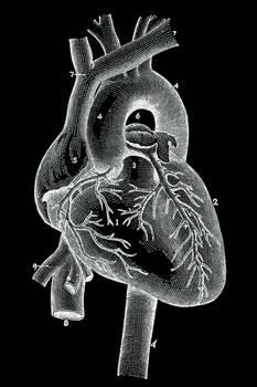 Vintage Heart Illustration (freebie)