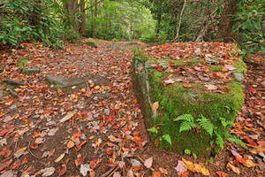 Autumn Moss Boulder Trail by boldfrontiers