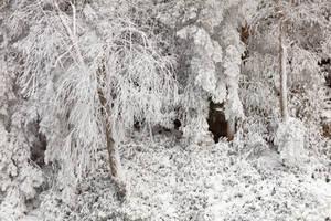 Winter White Foliage (freebie) by boldfrontiers