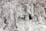 Winter White Foliage (freebie)