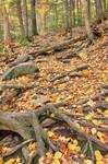 Autumn Maliseet Forest Trail