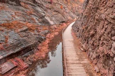 Paw Paw Boardwalk Trail - Pink Pastel Fantasy
