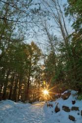 Frozen Sunset Forest Trail