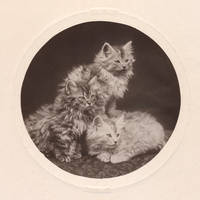 Vintage Kittens (freebie) by boldfrontiers