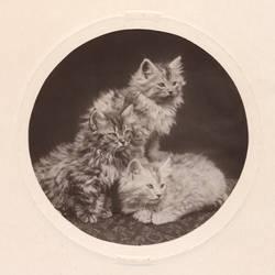 Vintage Kittens (freebie)
