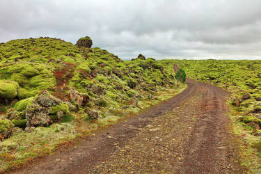 Rugged Iceland Moss Trail by boldfrontiers