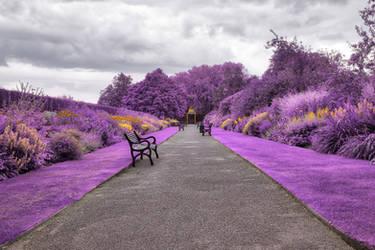 Belfast Botanic Gardens - Purple Fantasy by boldfrontiers