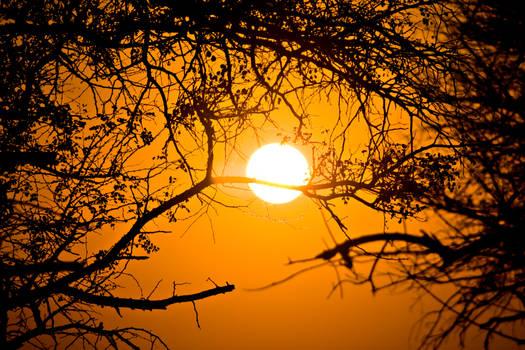 Forest Sunrise - Kruger National Park