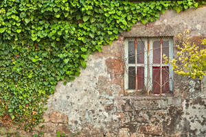 Ivy Wall by boldfrontiers