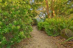 San Francisco Botanical Trail