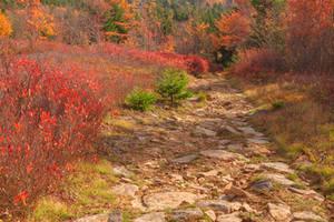 Autumn Christmas Trail
