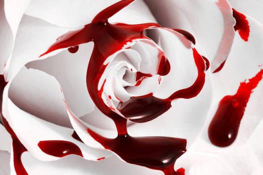 Bleeding Rose II