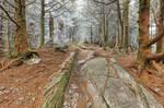 Appalachian Frost Trail