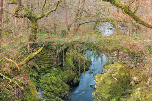 Ancient Moss Forest Bridge
