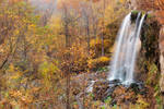 Falling Spring Autumn Falls (freebie)