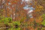 Autumn Canal - Swains Lock (freebie)