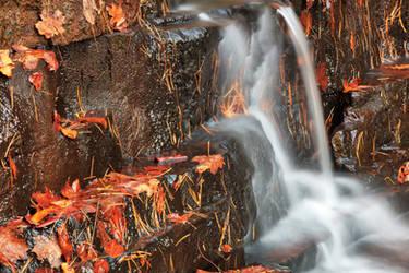 Autumn Fenwick Stream