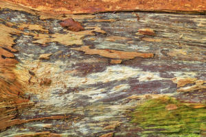Peeling Wood Decay by boldfrontiers
