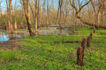 Stump Line Marsh
